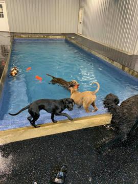 Daycare Swim