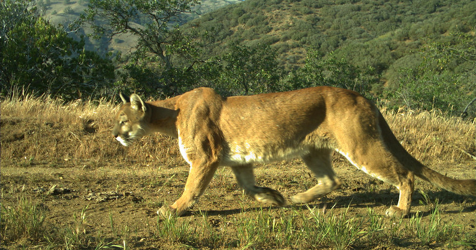 19. wildlife camera traps.JPG