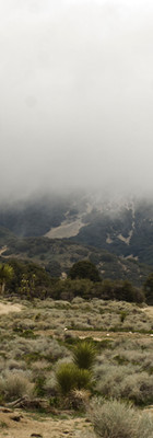 Clouds descend over blooming Joshua trees