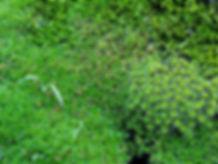 Botanics.jpg