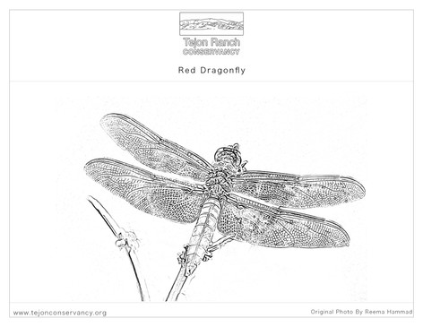Red DragonFly Coloring Page