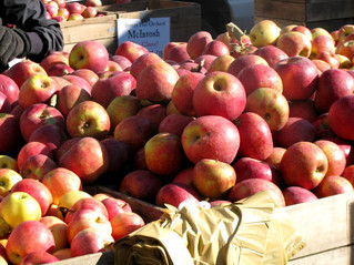 UBC苹果节花园帐篷苹果品尝(10月13日和10月14日 11-4点