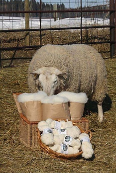 Supreme Wool Champion