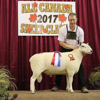 Canadian Sheep Classic