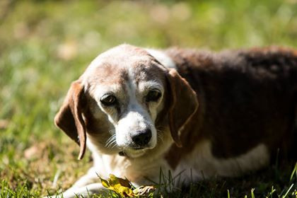 Helping dogs when there is a death in the family
