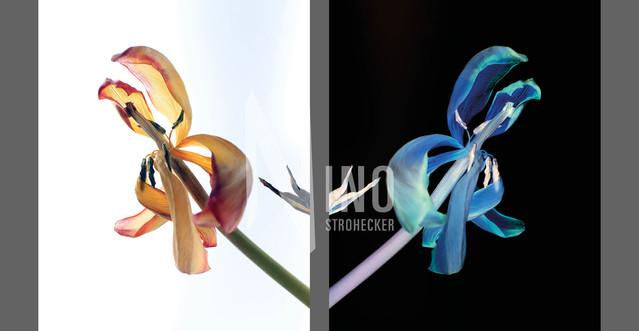 Flowers Of Kind Nr29