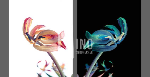 Flowers Of Kind Nr33