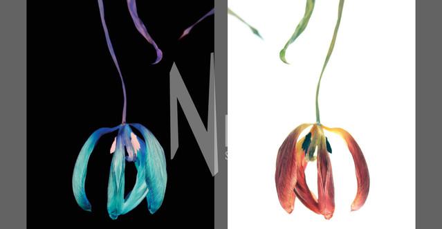 Flowers Of Kind Nr10