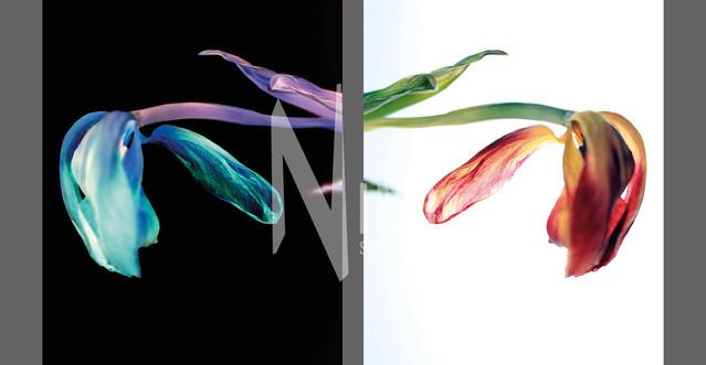 Flowers Of Kind Nr32