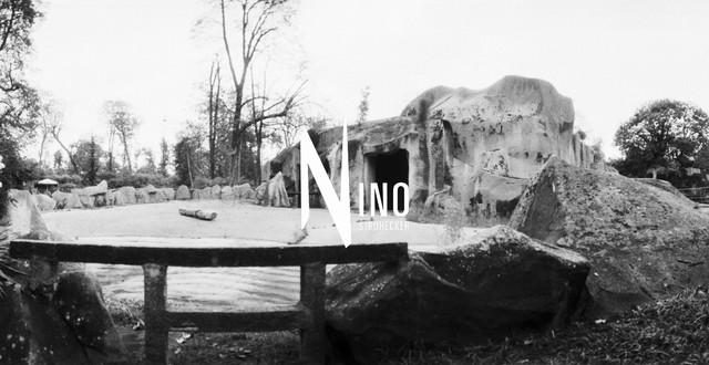 Zoo Nr31