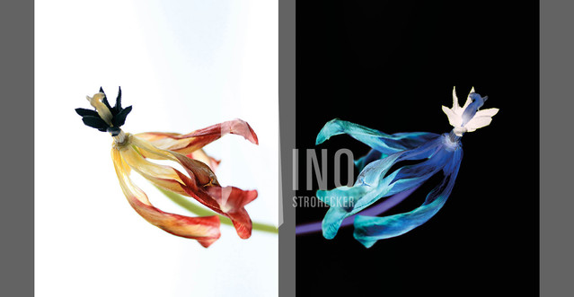 Flowers Of Kind Nr11