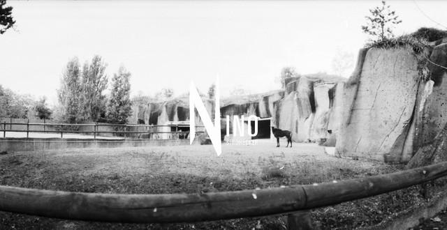 Zoo Nr02