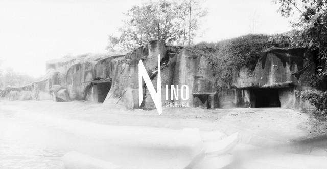 Zoo Nr11
