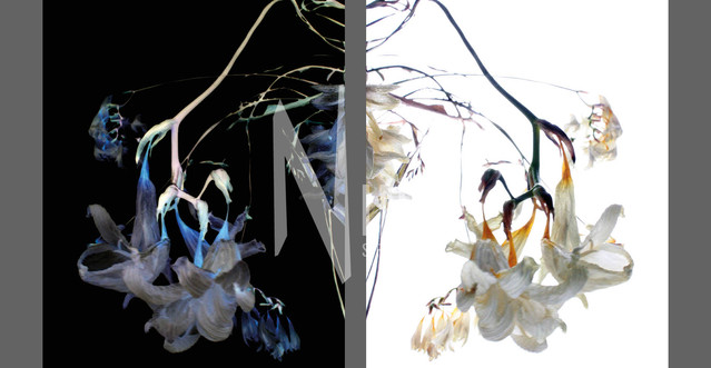 Flowers Of Kind Nr02