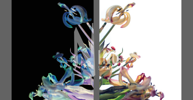Flowers Of Kind Nr34
