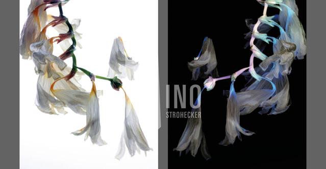 Flowers Of Kind Nr03