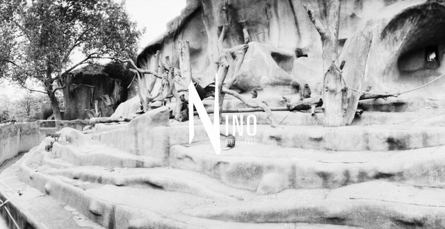 Zoo Nr22