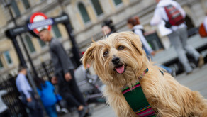 Dogs of London Are You Ready?