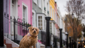 5 London Spots to Capture That Perfect Pooch Photo