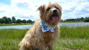 Game, Set and Match for Dog Friendly Wimbledon
