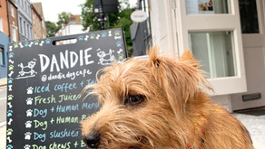 The Dandiest of Dog Cafes