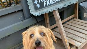 Super Dog Friendly Young's Pubs
