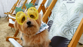 What to do with Your Dog this Bank Holiday