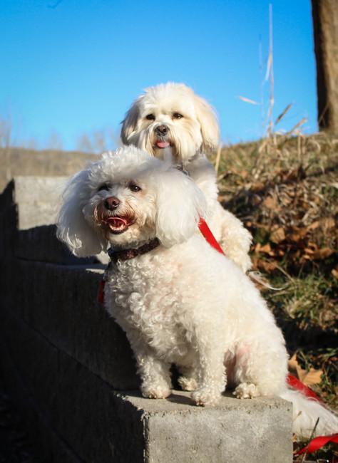 Nala & Kira exploring Barber Park
