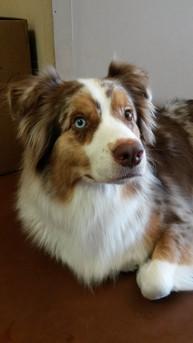 Handsome Quinn