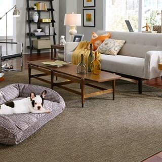 Shaw Chance carpet flooring