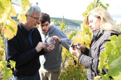 Marie-Luise testing grapes on Weingut Kerpen