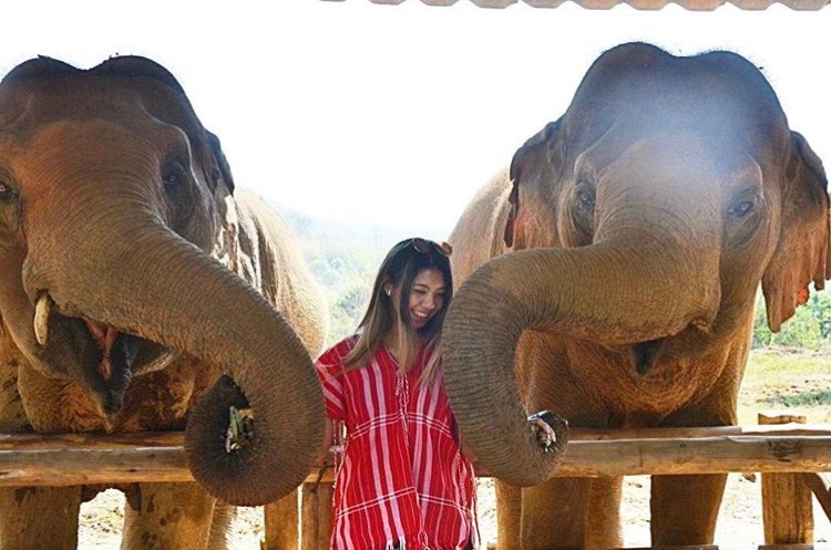 Brittany with cute elephants!