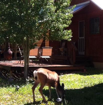 Riverside Cabin 19.jpeg