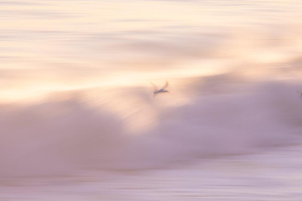 @julie_chandelier_Creamy Wave-1.jpg