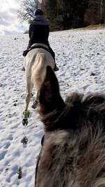 Im wilden Gallop gehts im Winter über die Felder