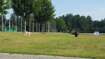 Akita,Revieren,Langenthal