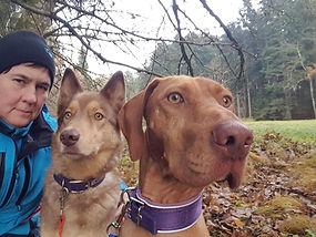 Hundeschule Langenthal
