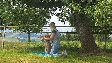 Hunde Massage