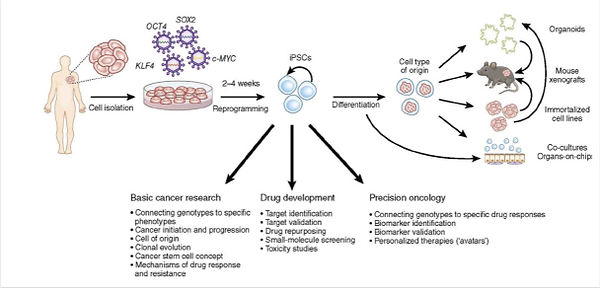 basic-cancer-research-drug-development-c