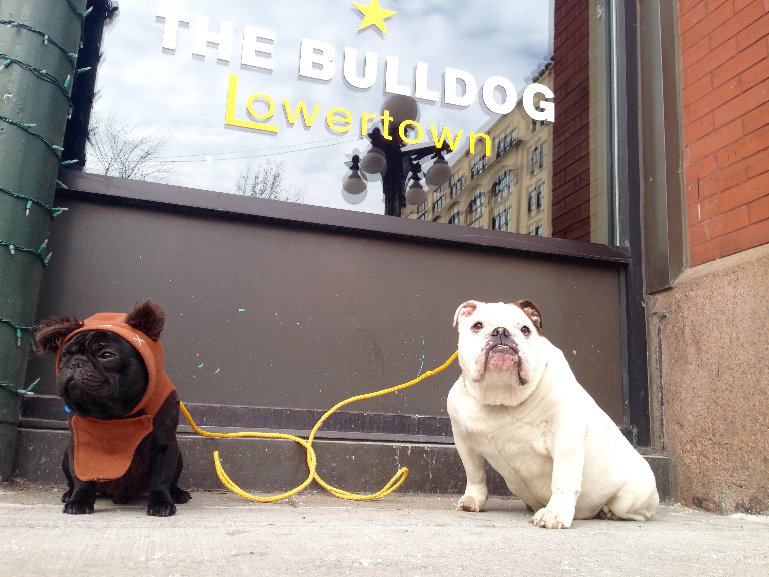 The Bulldog(s)