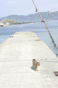 漁港の写真