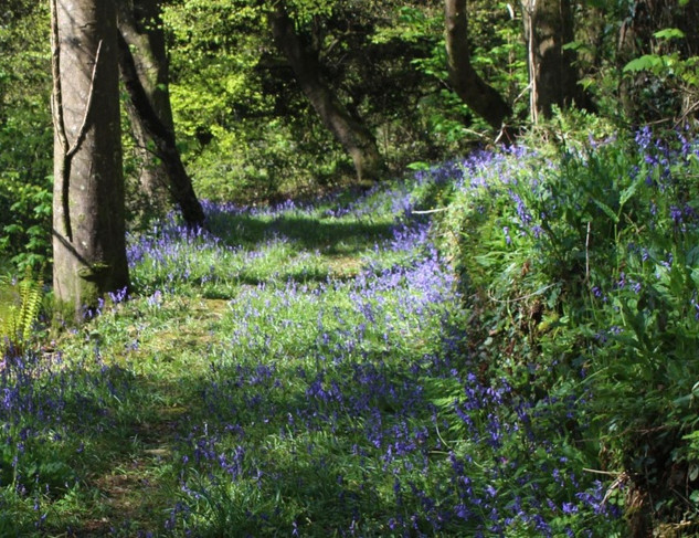 Walk the bluebell wood in May