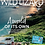 Thumbnail: Wild Lizard: single issue