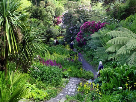 Discover Cornwall's stunning gardens