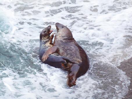 A seal deal