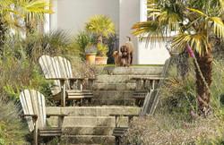 dog-friendly-cornwall-770x500