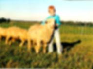 wool breeding stock