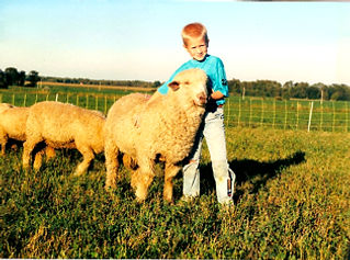wool breeding stock