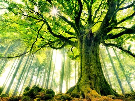 Firma jako strom