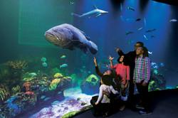 Wonders of Wildlife Shipwreck Aquarium